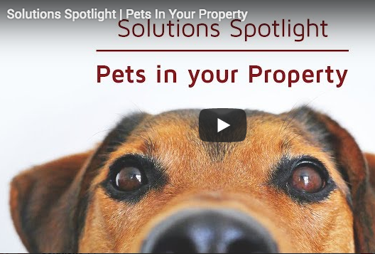 Pets in your property